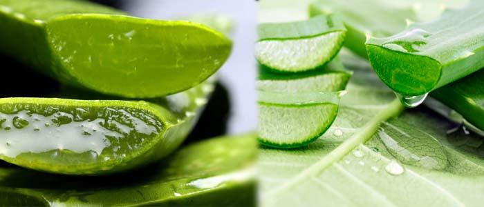 घर पर कैसे बनाएं  एलोवेरा की सब्जी | How to Make Aloe Vera's Recipe at Home